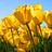 """글쓴이       나야동건이 @miussuudu     故 최진실 딸 최준희, 훈훈한 근황 """"사랑하는 홍진경 이모랑 데이트"""" https://t.co/UAqtgkfa2S"""